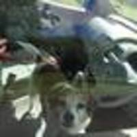 dog left 40 minutes in hot car in wellington