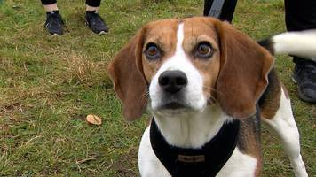 University of East Anglia students offered dog walks to beat stress