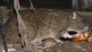 weekly paper review: rat raid on estate and double stabbing