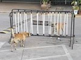 two dogs hilariously snarl at one another but neither wants to step around barrier separating them