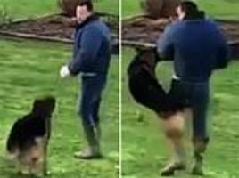bobby zamora lets two german shepherds loose on old pal john terry in hilarious video