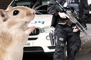 your reactions to the derbyshire police gerbil rescue