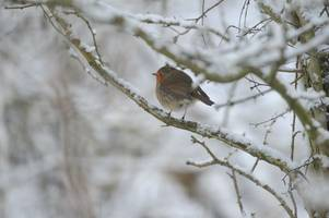 met office weather: how long it will snow in your part of east anglia