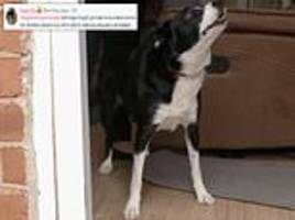 fans of dog's behaving very badly get annoyed as owners let their dogs run riot
