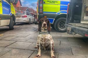 police dog which rumbled birmingham crime network had £25k bounty placed on its head