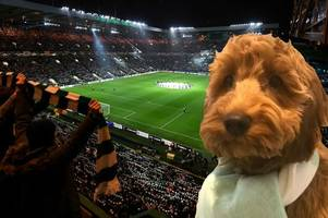watch hilarious video of cockapoo 'singing' the celtic song