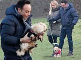 ant mcpartlin looks delighted as he cuddles his new puppies on stroll with anne-marie corbett