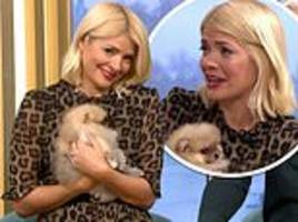 holly willoughby begs to keep basket of adorable puppies after finding out she has to return them