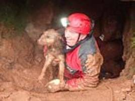 rescue team who helped save thai boys now free dog trapped in welsh cave for three days