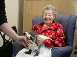 elderly woman, 92, achieves life goal of holding beloved penguin