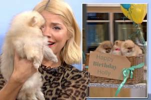 holly willoughby's birthday stunt slammed by dog charity as she had to hand puppies back