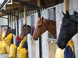 Racing shutdown may END on Wednesday after Equine Influenza outbreak