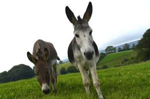 Two Devon Donkey Sanctuary sites closed because of equine flu outbreak