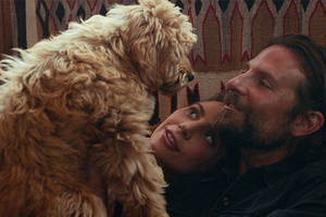 bradley cooper's dog helps win him win peta's 'oscat' award for 'a star is born'
