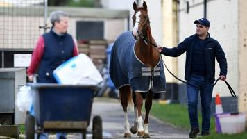 equine flu: british horse racing to resume after shutdown over virus
