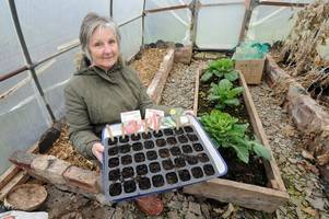 twynholm gardener launches bid to create community allotments in kirkcudbright