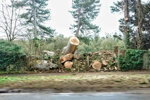 Egham tree that fell into road and killed passenger 'was on private land' says council
