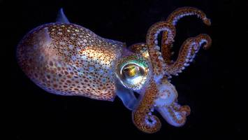 squid protein could be an eco-friendly alternative to plastics, study finds