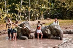 bali zoo's elephant mud fun to attract thousands of international visitors