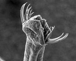 worms help scientists understand memory formation and recall