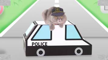 Watch: Japanese Company Creates Traffic Safety Video for Cats