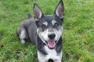 dogs trust west calder appeals for new home for bear