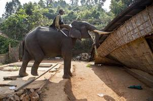 wwf funded anti-poaching guards who tortured, killed dozens across africa, asia