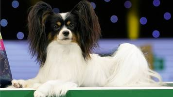 crufts in numbers