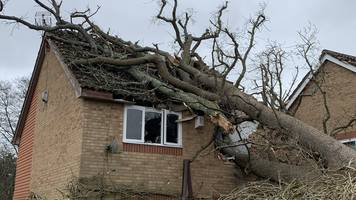 oak tree collapses on home near crawley in high winds