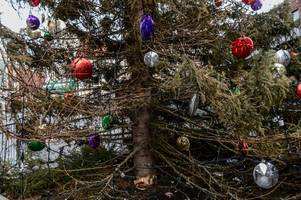 Norway CANCELS 15-year Christmas gift to Grimsby tradition admitting 'our trees are not good enough for you'