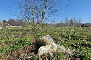 rubbish emerging from ground at broadwater park golf course will be covered as 'recapping' approved