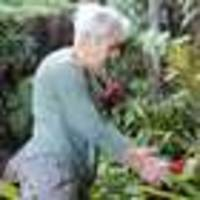 garden raid on bromeliads in mangonui leaves victim in fear
