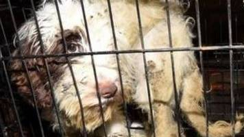 fifty-four dogs locked in cages at home
