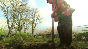 digging for victory in birmingham allotments battle