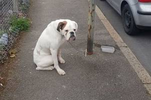 heartbreaking picture shows scared dog dumped in street and tied to a lamppost