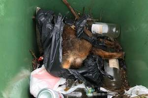 Dying fox found beaten and tied up inside wheelie bin following 'callous attack'