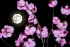 pink moon visible in scotland today - this is the best time to see it