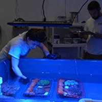 moody gardens opens reefer lab on 4/20