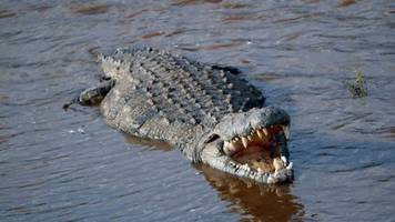 terrifying 'death roll' almost universal among crocodile species, study finds