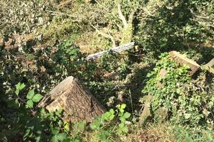 illegally felled trees in farnborough cost developer thousands after court case