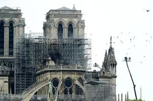 how trees from ashbourne could help rebuild notre dame