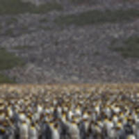 penguins don't just look smart, they are highly intelligent, says study