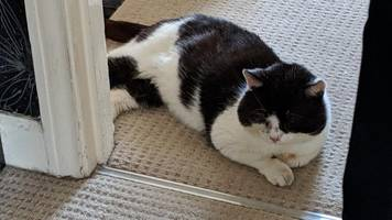 cat missing for nine years in leicester reunited with owner