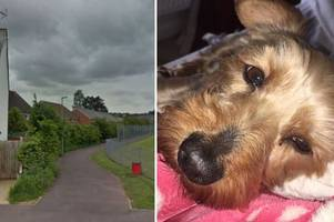 dog 'didn't have time to bark' before it was savaged to death in frenzied attack