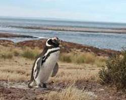 influential excrement: how life in antarctica thrives on penguin poop