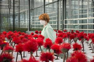 'little joe' film review: cannes gets a horticultural horror flick