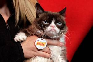 Grumpy Cat social media star has died, owners announce