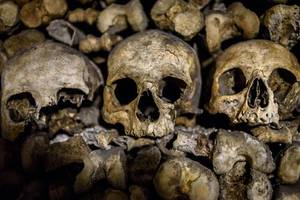 archaeologists find puzzling 'jars of the dead' in laotian forest