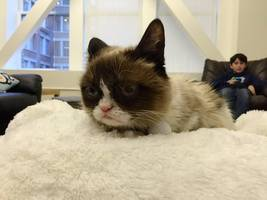 grumpy cat: 7 things to know about frowning feline