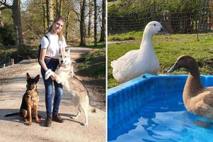 animal lover wakes to horrifying scene as ducks are savagely attacked